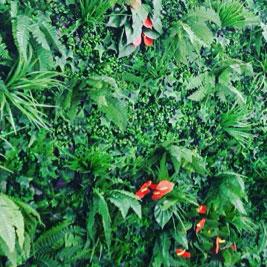 Treillis fleuris et mur végétal